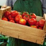 En Europa el tomate es español